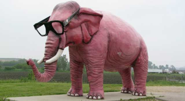 Real Pink Elephant Who needs pink elephants?