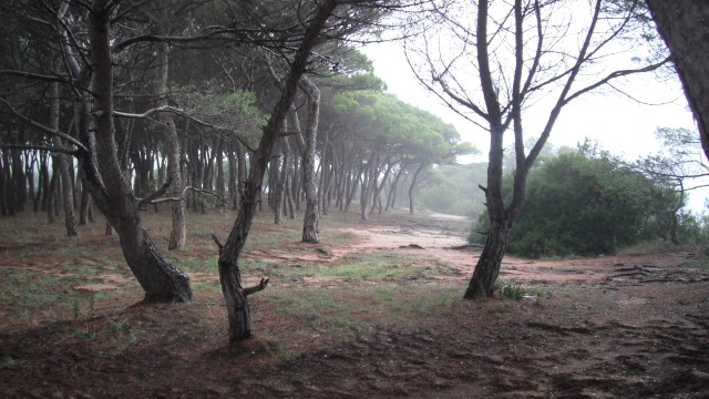 Forest in the mist in Spain by John