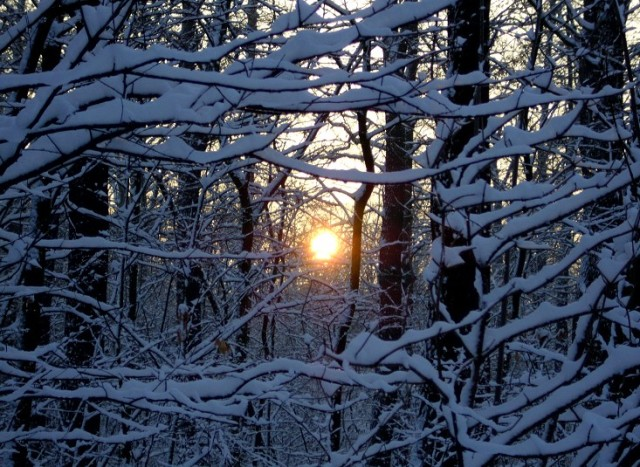A glimpse of the winter sun in Poland by Lukas
