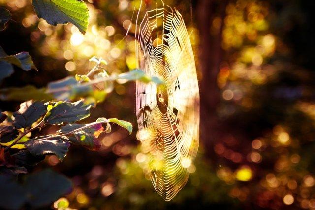 bathed_in_gold_by_ksenkat-d34jwde