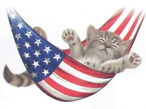 july 4 kitten