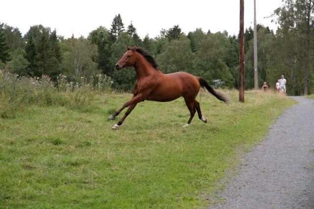 horse on path