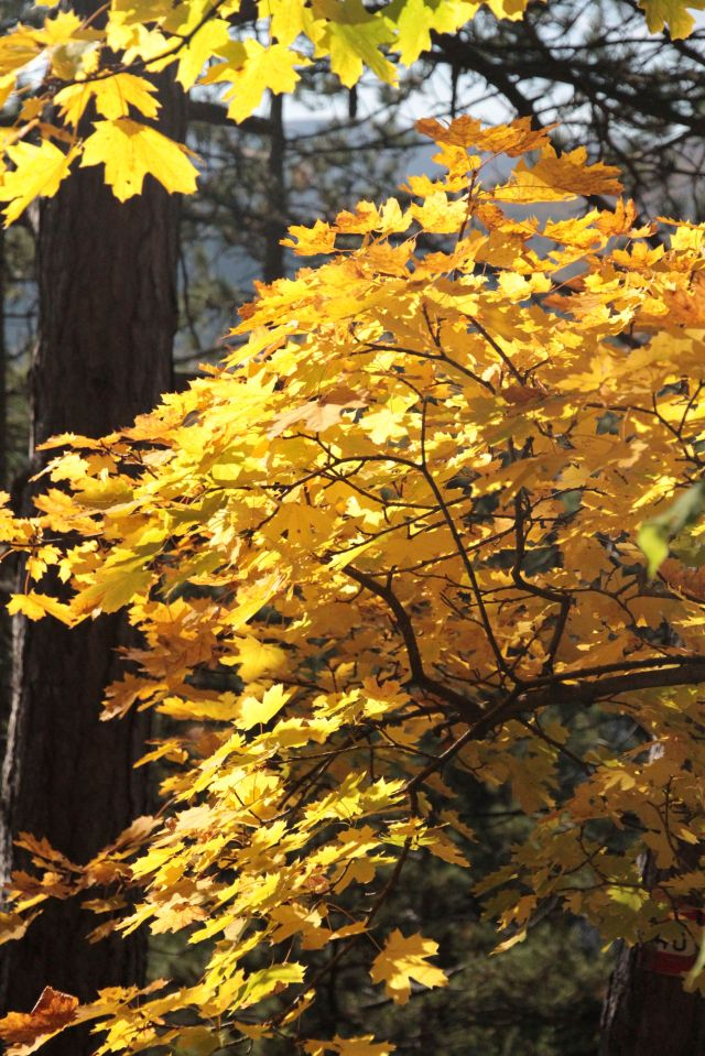 Orange yellow leaves