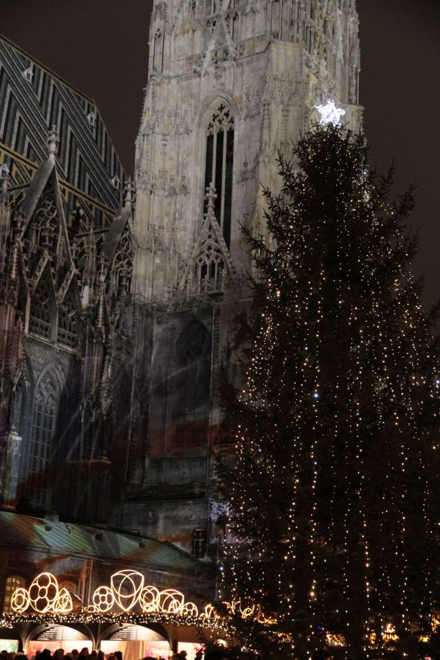 Stephansdom tree 2