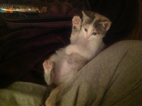 cbluckycat2