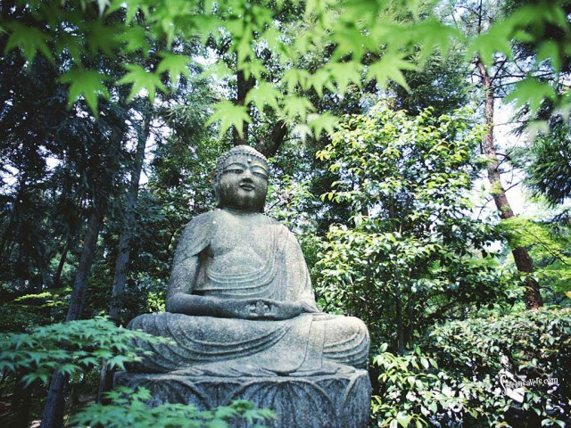 Buddha-in-Forest