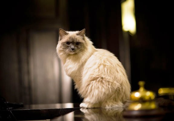 Algonquin_cat_Matilda