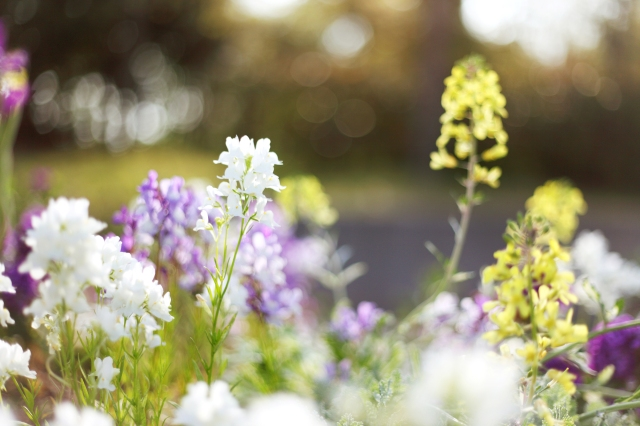 flowers-flowers-white-purple-yellow-light-plants-grass-meadow-bloom-spring-light-glare