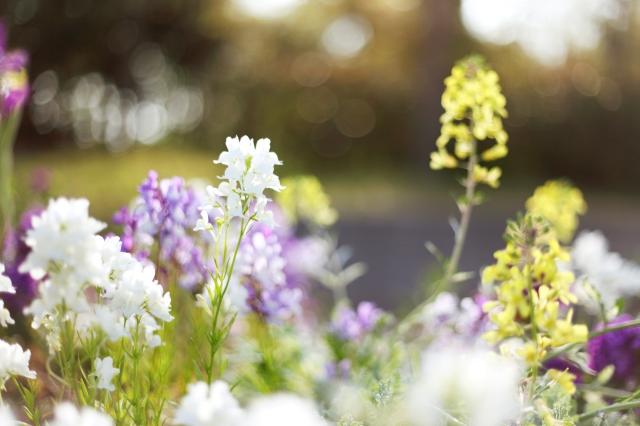 flowers-flowers-white-purple-yellow-light-plants-grass-meadow-bloom-spring-light-glare